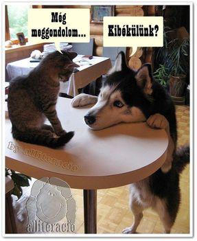 vicces állatok 2