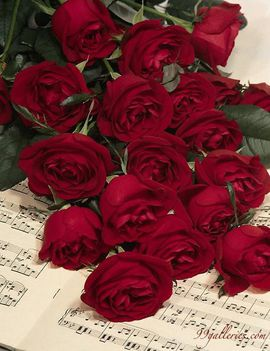 Rózsa 55-hgt