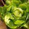 Februári fejes saláta