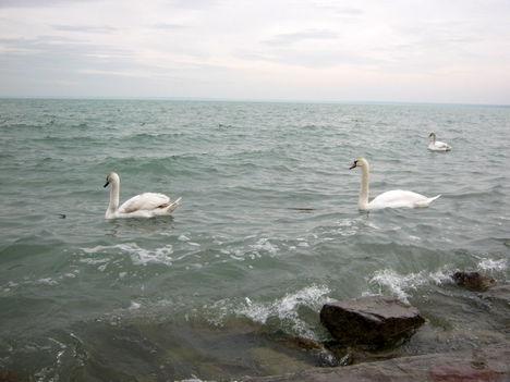 Februári Balaton... 4
