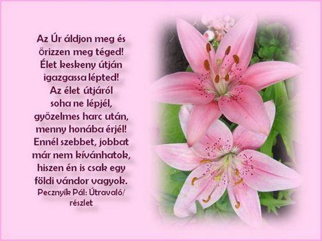 Rádiné Zsuzsikát névnapja alkalmából szeretettel köszöntöm ,Isten éltessen ,boldog  névnapot!