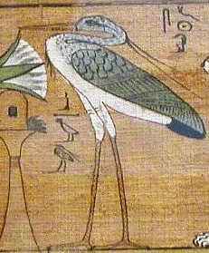 Benu madár