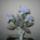 Stengelné Marika virágai