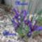 Tavaszi virágom