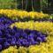 Virágok-0190