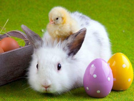 Béké Boldog Húsvétot!