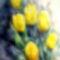 Tavaszi hírnökök