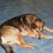 A kutya tekintete mindent elmond bajról, örömről! 10