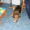 A kutya tekintete mindent elmond bajról, örömről! 1
