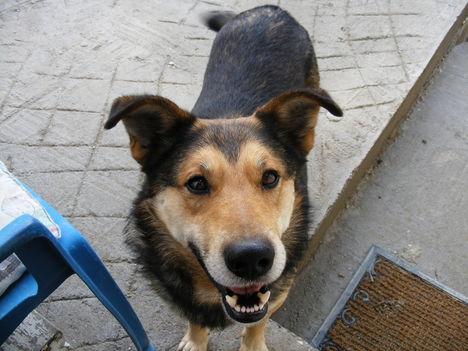 A kutya tekintete mindent elmond bajról, örömről! 2