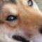 A kutya tekintete mindent elmond bajról, örömről! 5