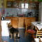 A kutya tekintete mindent elmond bajról, örömről! 7
