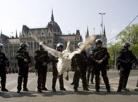 A liba támadásba lendűlt a rendőr sorfal ellen!