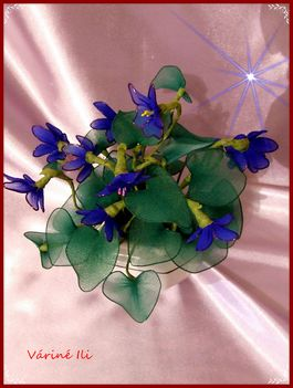 kék ibolya