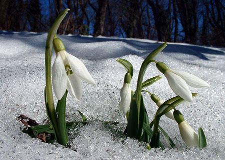 Kezdődik, és a a jövő hét elején már szinte tavasz lesz.