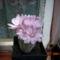 kicsi virágzó 2