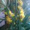 Orhidea /oldalról/