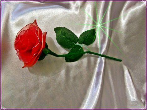 rózsaszál....