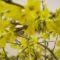 tavasz 14
