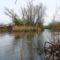 Mosoni-Duna, Feketerdő Felső Macska-sziget 2016. március 17.-én 2