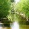 Lajta folyó ausztriai szakasza Wasenbrucknál, 2016. április 17.-én 5