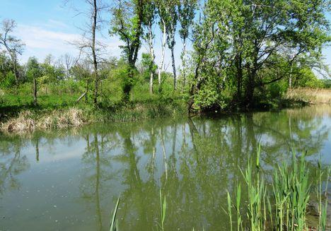Mosoni-Duna Feketeerdő alatti szakaszon az Alsó- Macskaszigetnél 2016