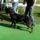 Rottweiler_tenyesztok_egyesulete_klubgyoztes_kiallitas_2016_aprilis_16_1983071_1136_t