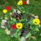 Tavaszi virágaim,2016 1