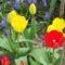 Tavaszi virágaim,2016 10