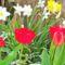 Tavaszi virágaim,2016 12
