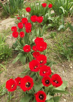 Tavaszi virágaim,2016 2