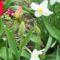 Tavaszi virágaim,2016 4