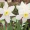 Tavaszi virágaim,2016 5