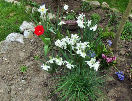 Virágaim,2016 4