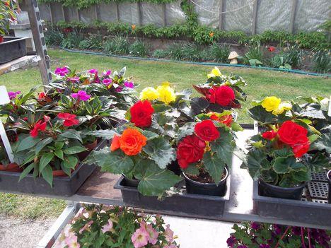 virágvásár Szombathely-Herény