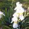 Kertem virágai
