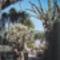 Jardin Egzotic, Monaco