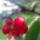 Cseresznye_1989620_5056_t