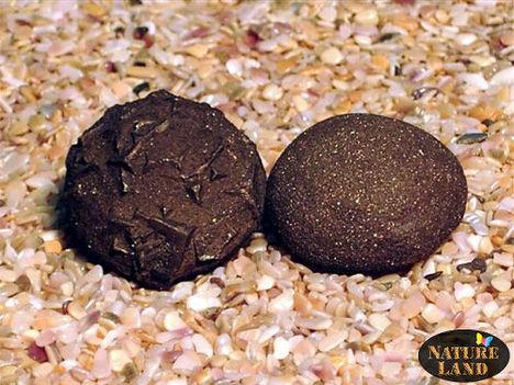 Moqui élő kő 3