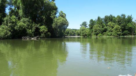Bagaméri Duna-ág a Vízafogó ág kitorkolásánál a Bagaméri mellékágrendszerben 2016. június 07. június 07.-én