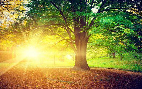 Csodás természet 5