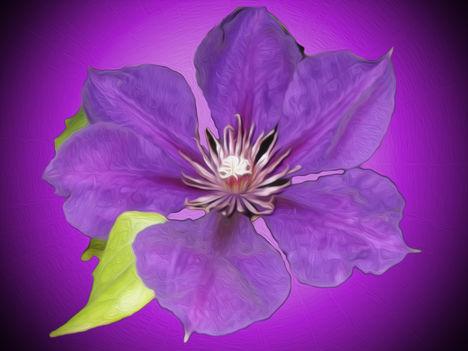 lila-junius