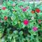 Virágok a zölldségesben