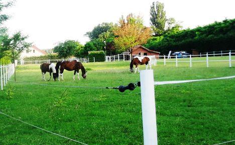 Legelésző lovak az Úgó és a Mosoni-Duna melletti falu részen , Halászi 2016. június 24.-én