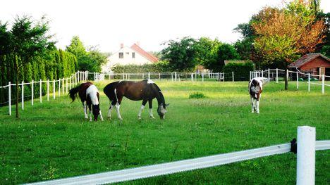 Legelésző lovak az Úgó és a Mosoni-Duna melletti falu részen , Halászi 2016. június 24.-én 1