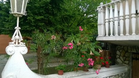 Ma ezek a virágok szépítik kertemet. 11