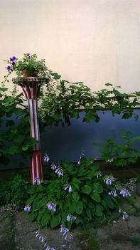 Ma ezek a virágok szépítik kertemet. 13