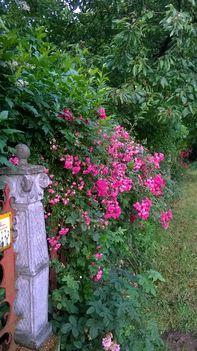 Ma ezek a virágok szépítik kertemet. 14