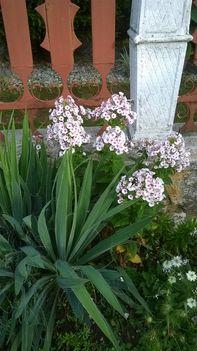 Ma ezek a virágok szépítik kertemet. 16