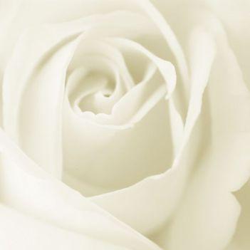 whiterose0